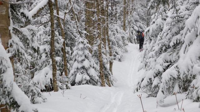 Mt. Garfield Trail, NH